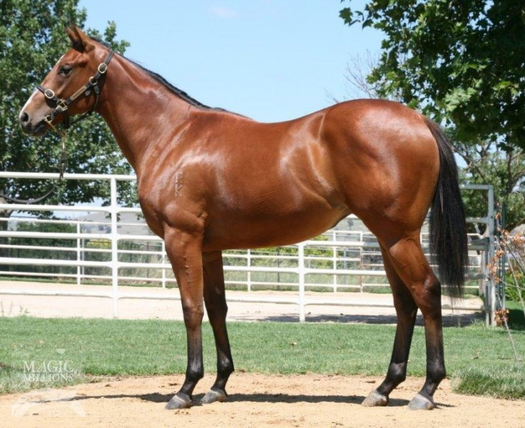 Hello Filly