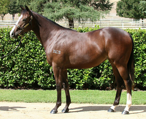 Maxi Dress (IRE) Filly