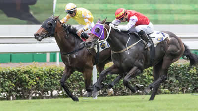 Newhaven Sold HK Winner Has Sibling for Inglis Easter