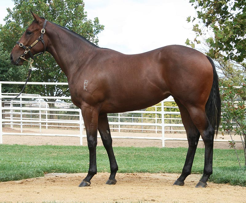 $1.8 million filly Al Naifa a winner