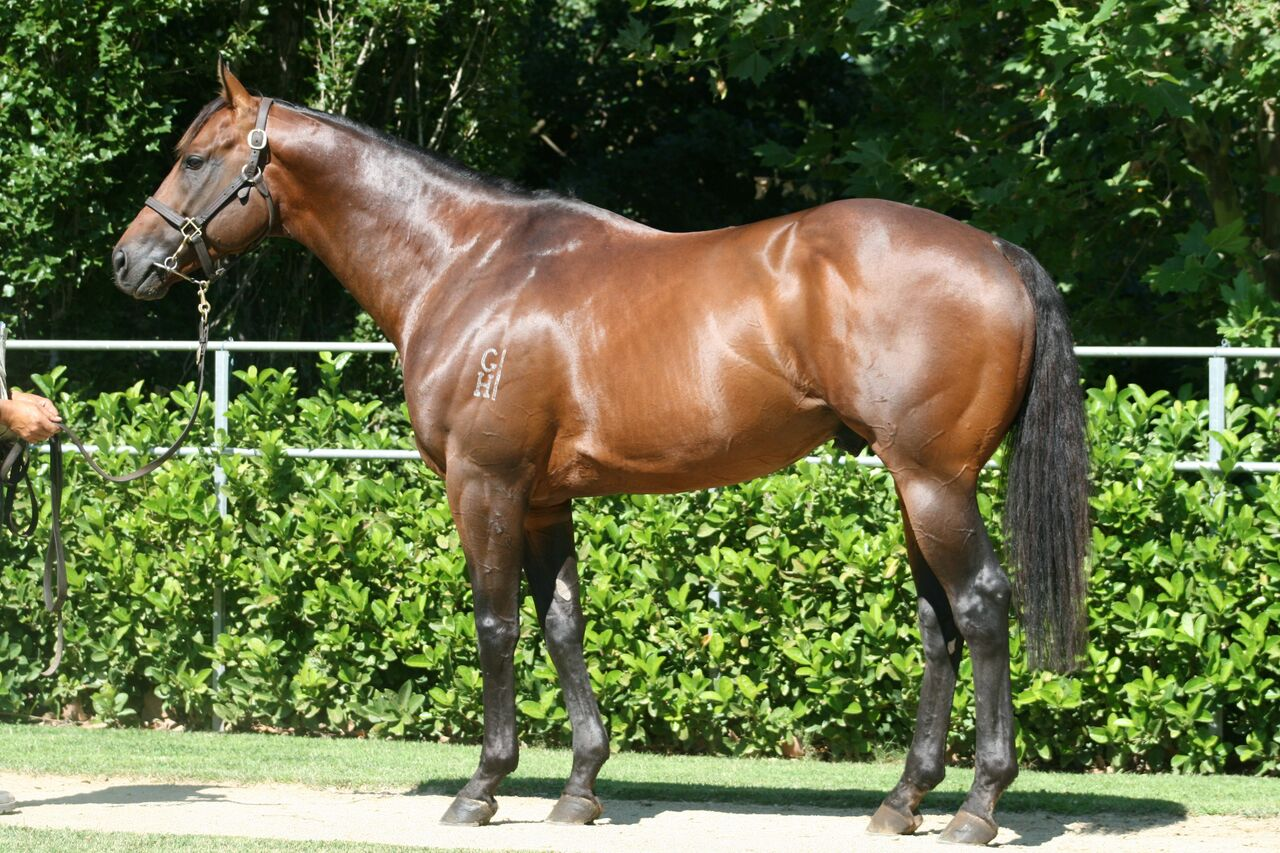 Winning Debut for Delago Deluxe Filly