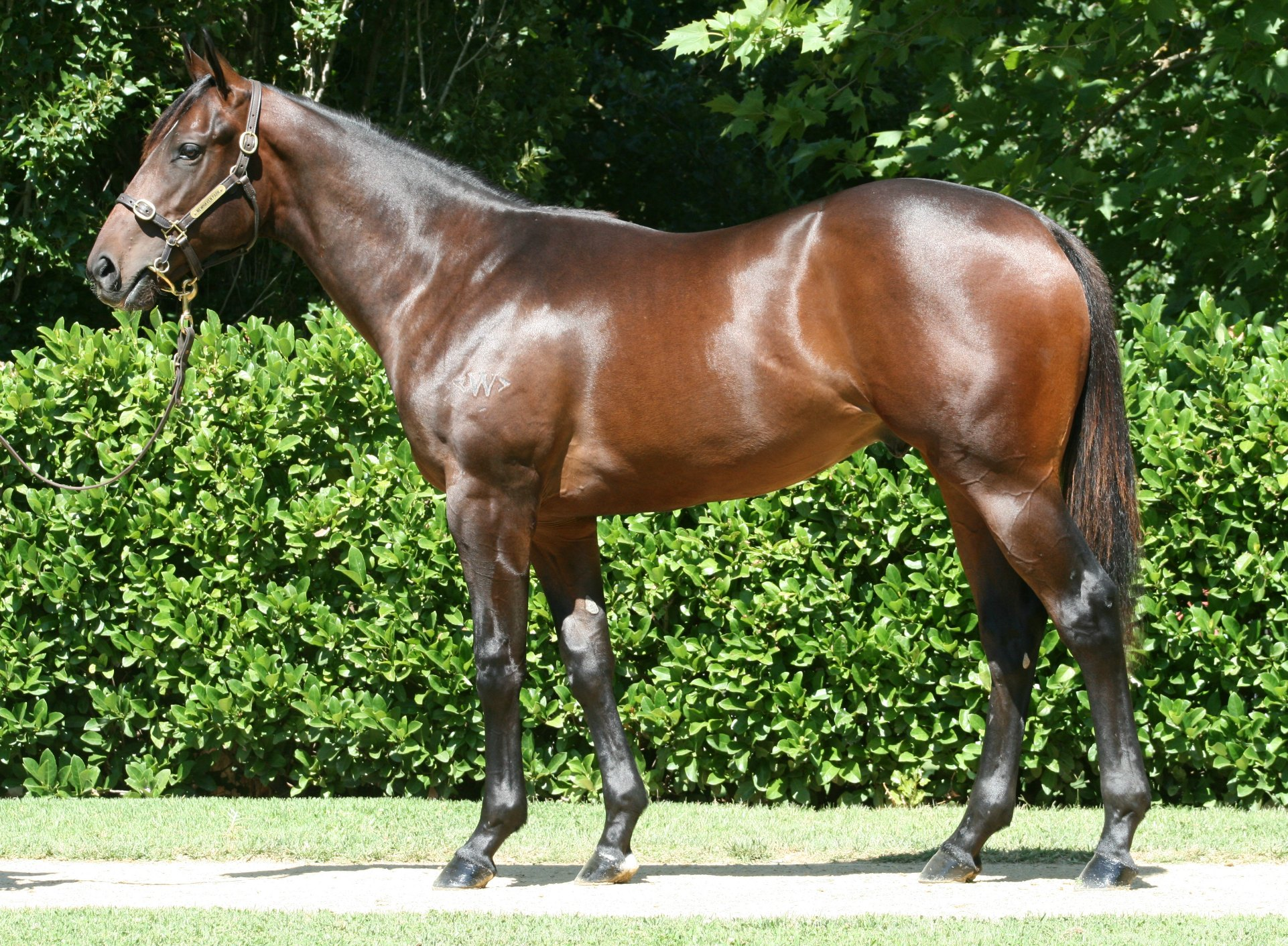 Stylish Winner Sold by Newhaven Park