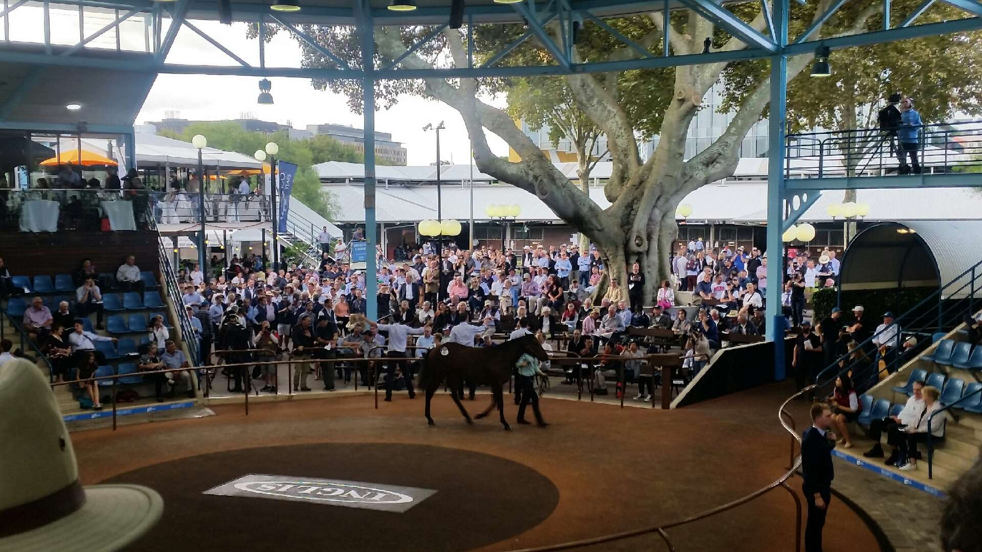 $1.8 Million Filly Sold by Newhaven Park