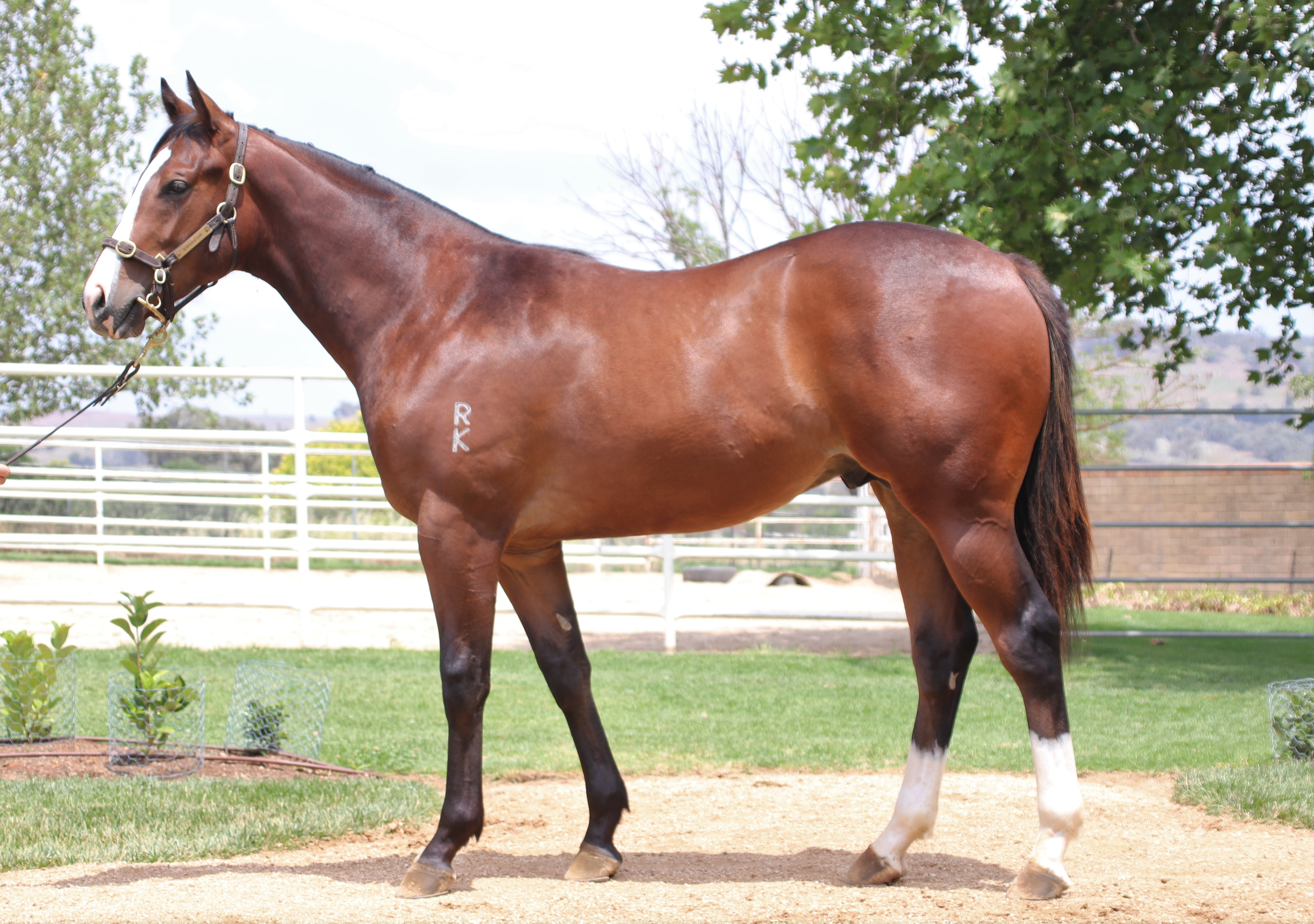 MOORE & SUMMIT RACING SECURE VIA AFRICA COLT