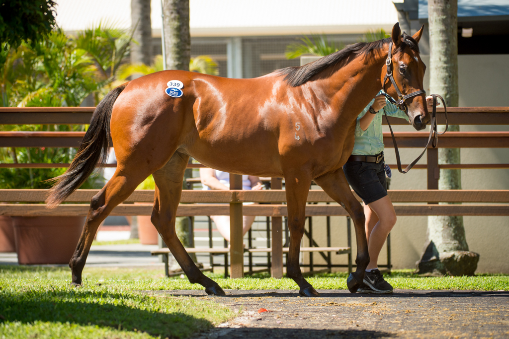 Shadwell Debut Winner Sold by Newhaven Park
