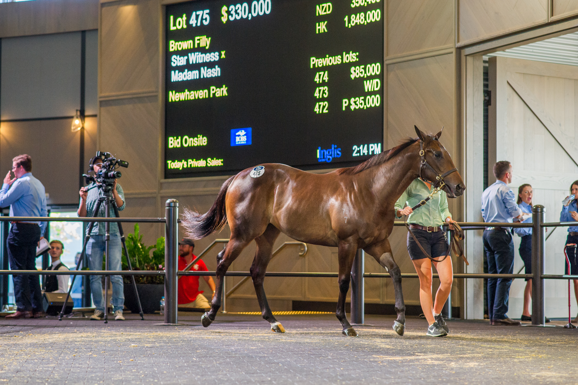 $350,000 Star Witness Filly Shines at Classic