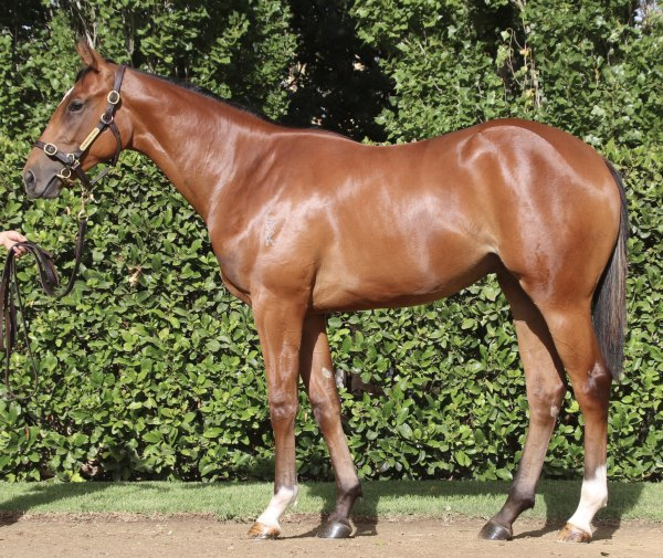 Moroccan Affair Filly