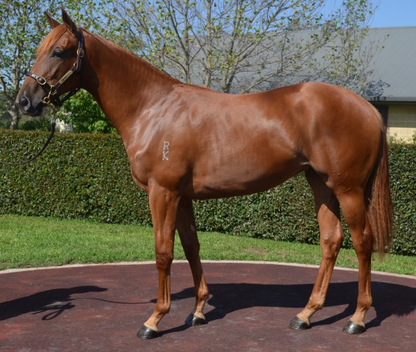 Roses Filly