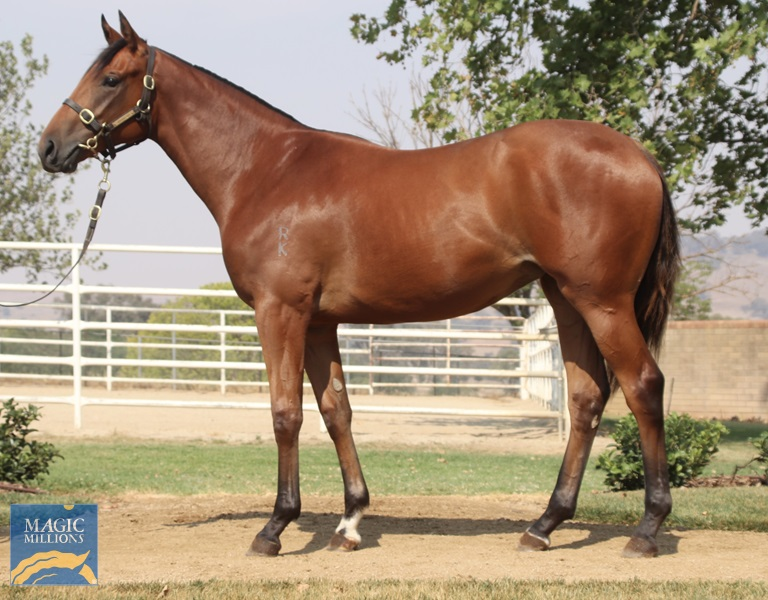 Frontalis Filly