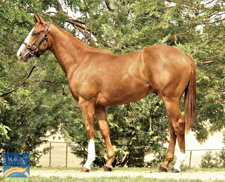 Gracefully Chic Colt