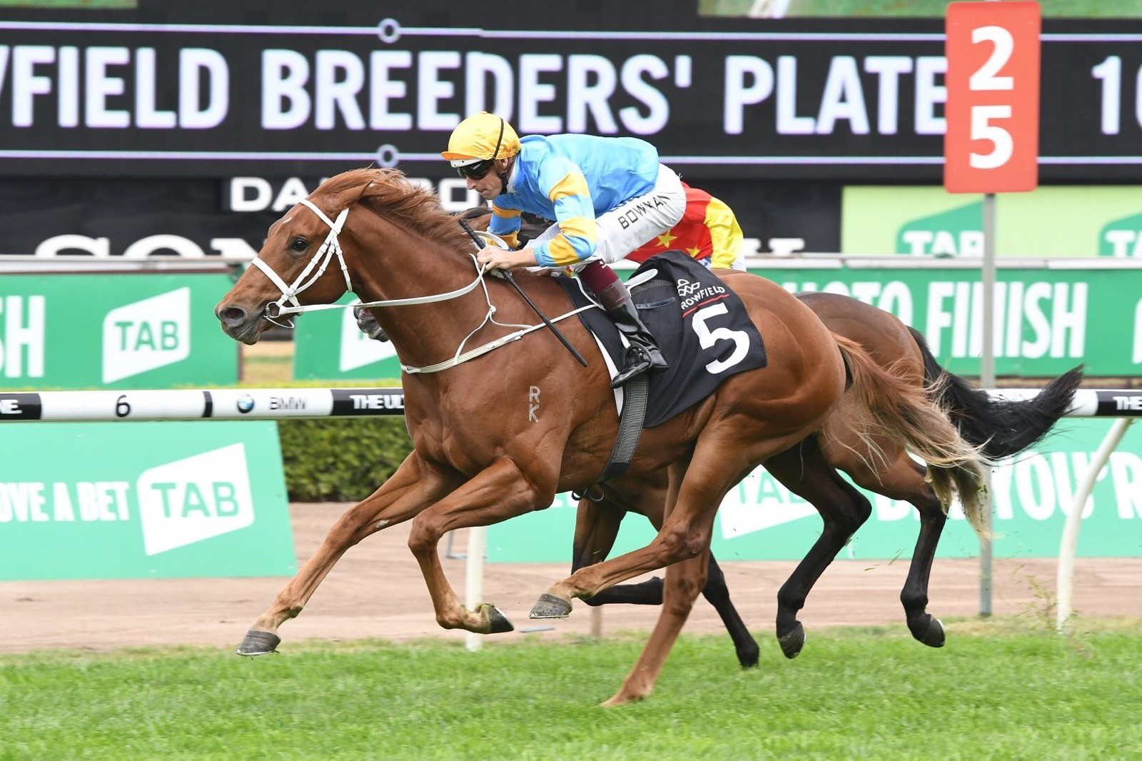 Newhaven Bred and Sold Performer Wins the Breeders Plate